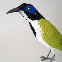 bluefaced-honeyeater